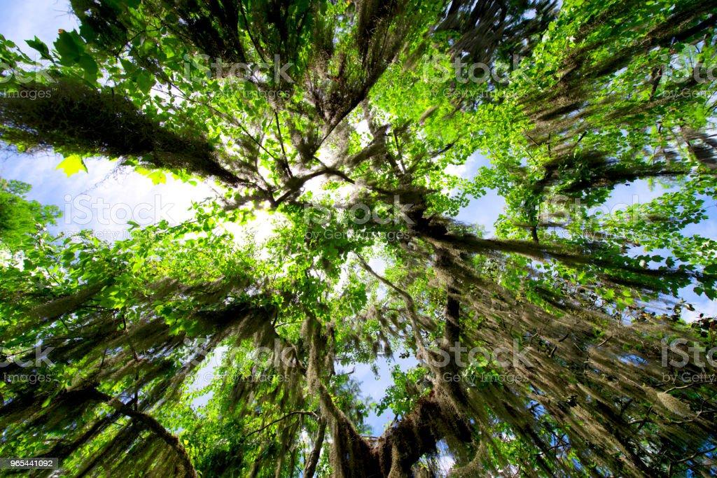 Route de chêne dans la forêt - Photo de Arbre libre de droits