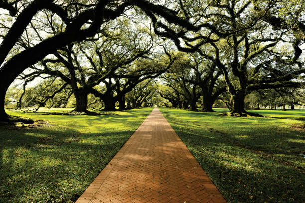 Oak road Oak road south carolina stock pictures, royalty-free photos & images