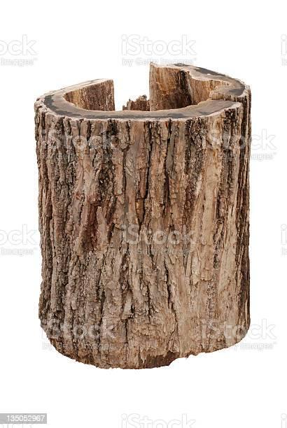 Photo of Oak stump