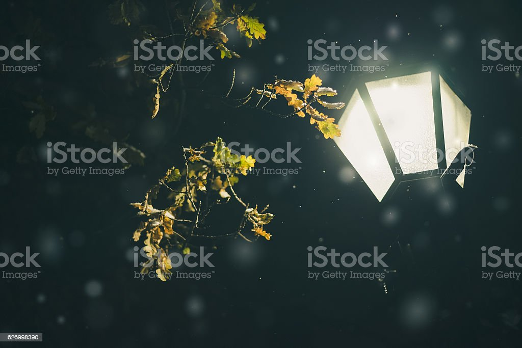 Oak tree and falling snow in light of lamppost stock photo