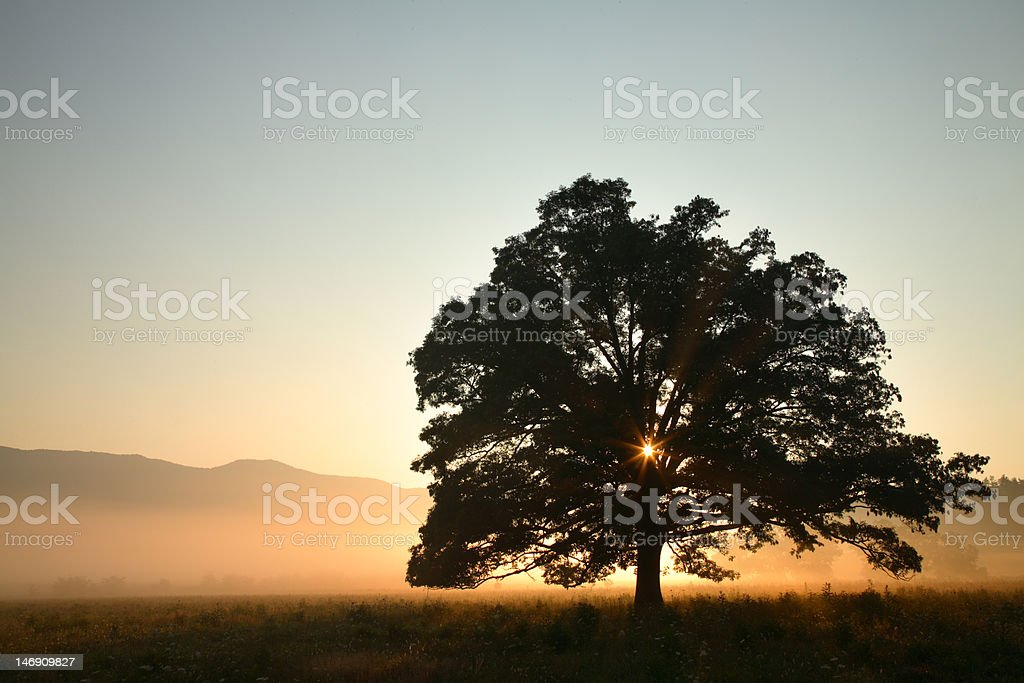 Oak Tree at Sunrise royalty-free stock photo