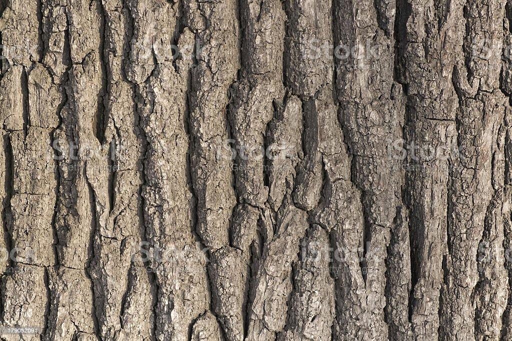 Oak tree bark royalty-free stock photo