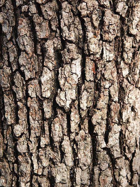 Oak tree bark stock photo