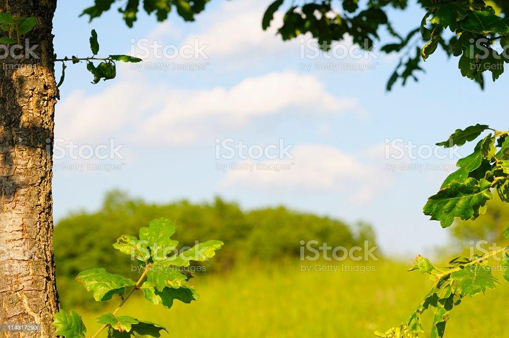 Oak Tree Frame royalty-free stock photo