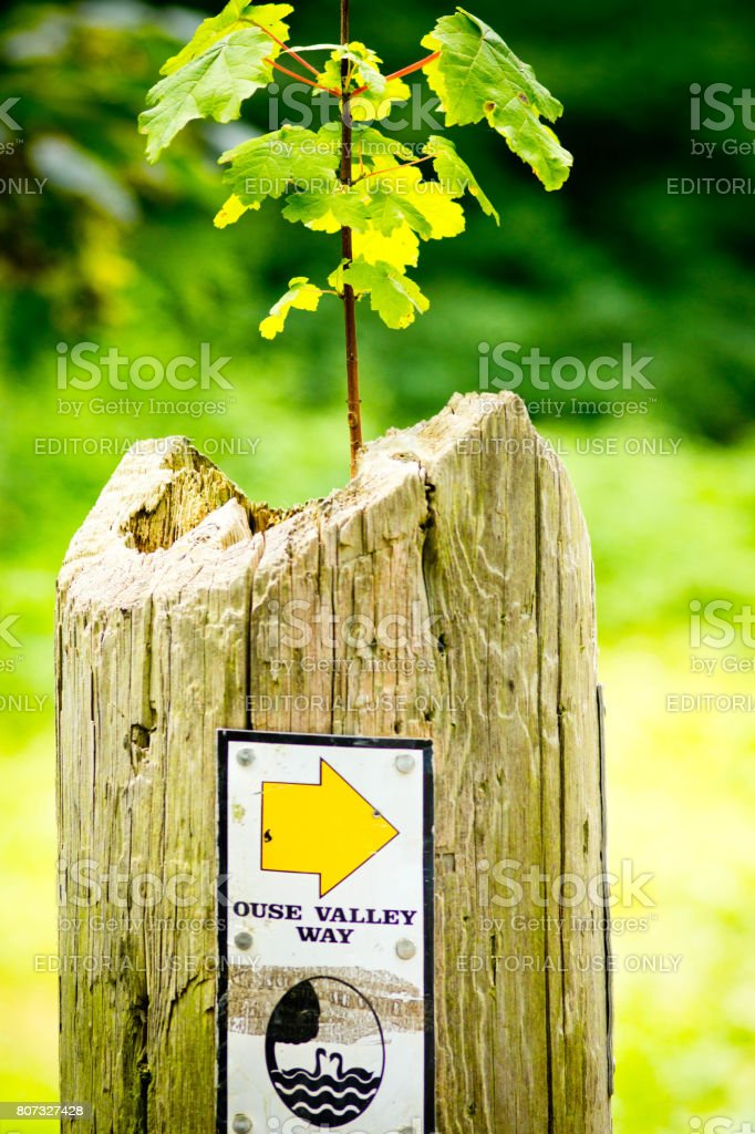 Oak tree growing on wooden post stock photo