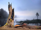 Ancient oak tree hit by lightning by foggy lake in morning