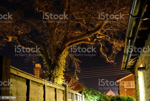 Photo of Oak Tree Illuminated at Night