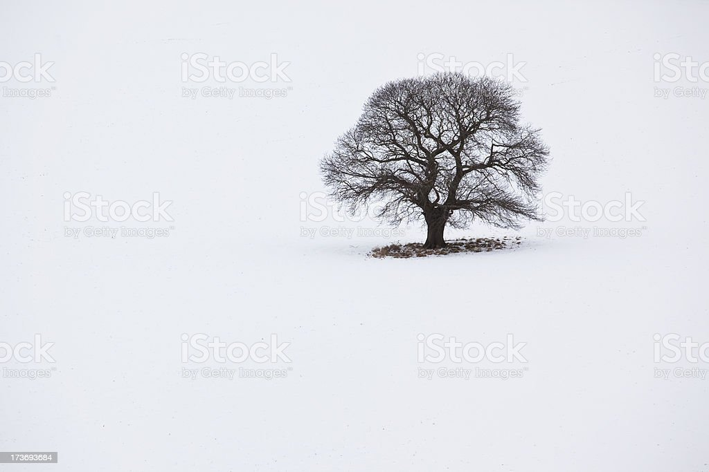 oak tree in snow royalty-free stock photo