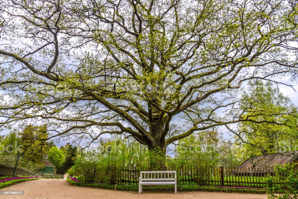 Oak tree in the estate of Pushkin, Pskov region, Russia Стоковые фото Стоковая фотография
