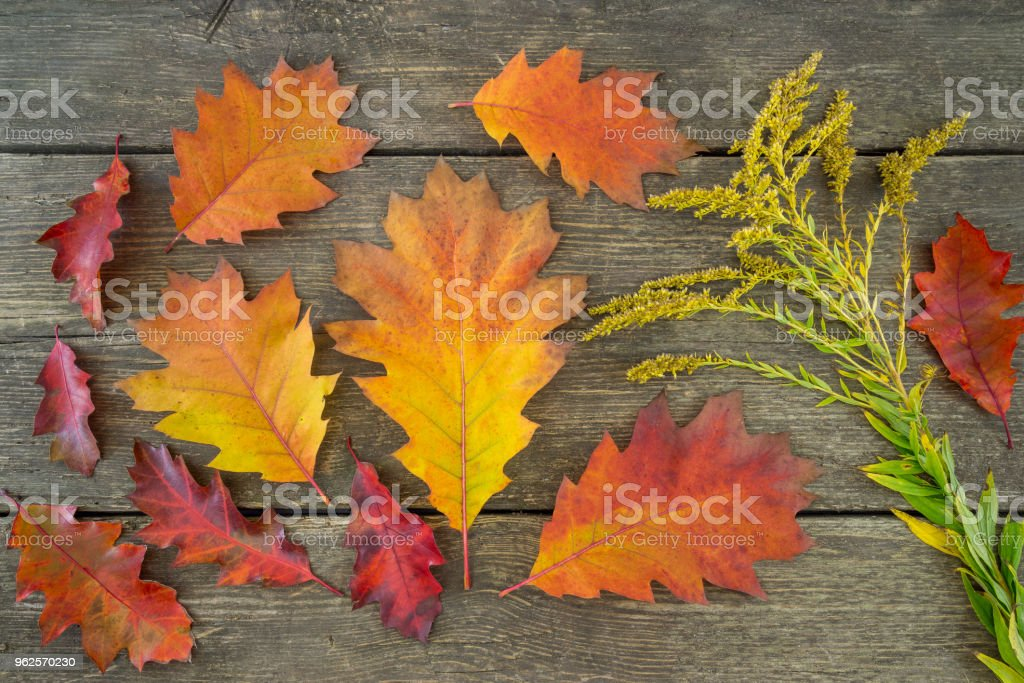 Oak tree leafs and pumpkins with a weathered grass on a rustic wooden background. Fall series. stock photo