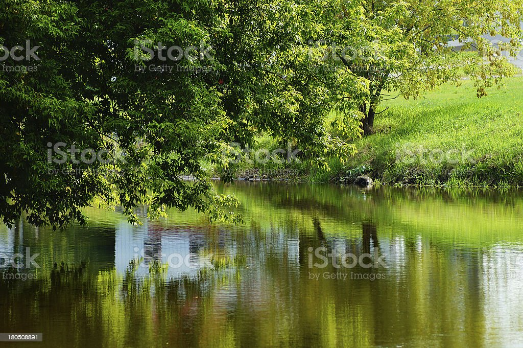 Oak tree reflected in water pond royalty-free stock photo