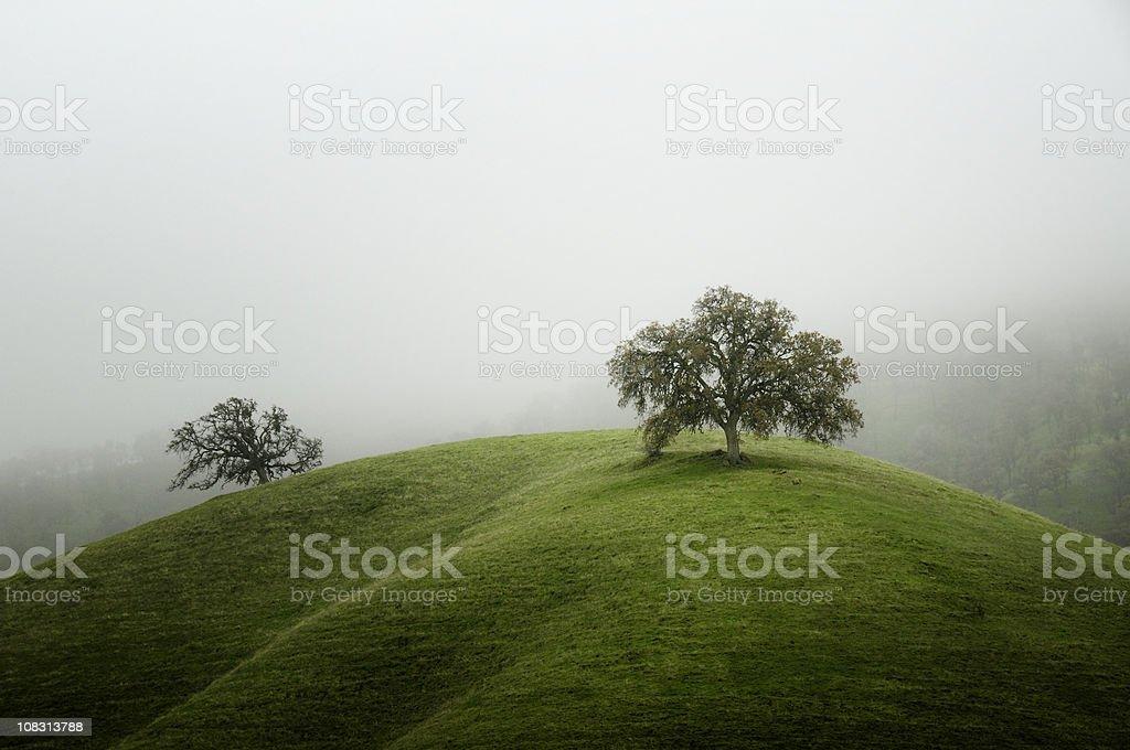 Oak Trees on a Grassy Hill royalty-free stock photo
