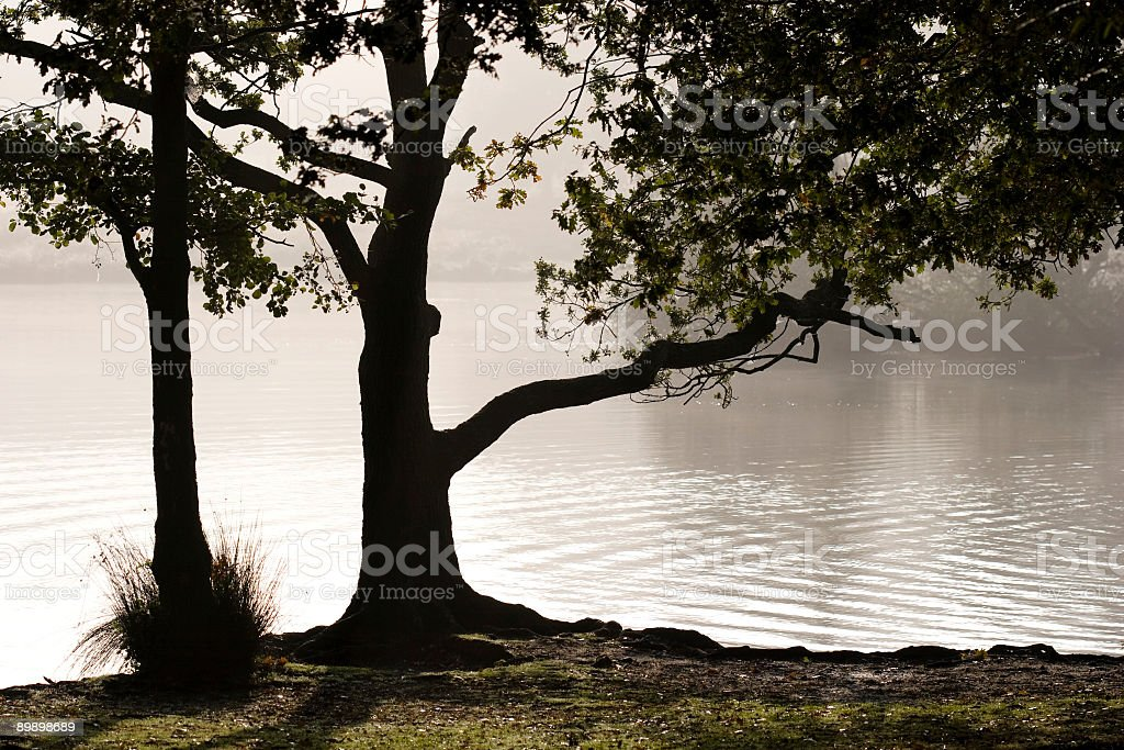 Oak trees silhouetted against morning mist royalty free stockfoto