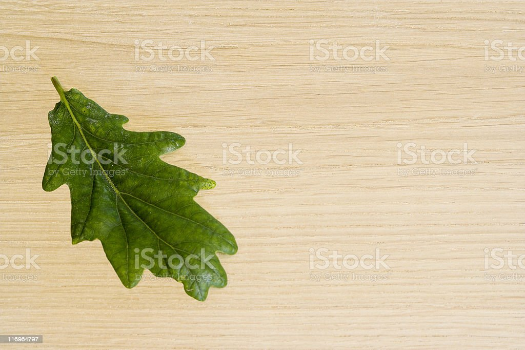Oak Wood Background With Corresponding Leaf From Tree royalty-free stock photo