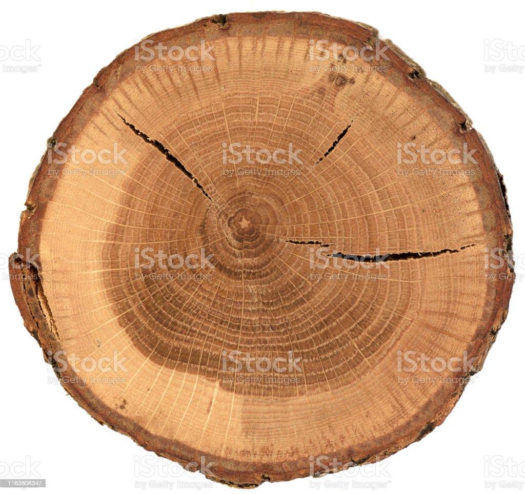 Eiken hout slab textuur met schors, groeiringen en scheuren geïsoleerd op witte achtergrond - Royalty-free Boom Stockfoto