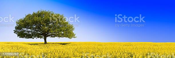 Oaken Blue Stock Photo - Download Image Now
