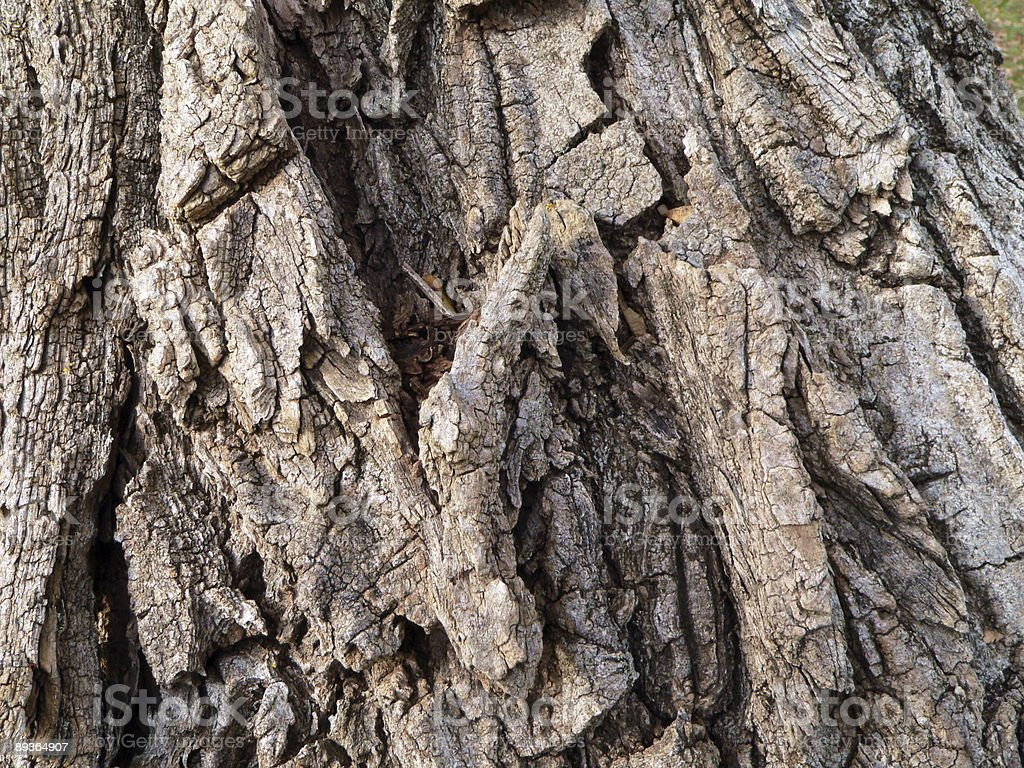 Oaken rind royalty-free stock photo