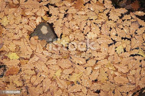 625881376 istock photo Oakleaf carpet 1189384488