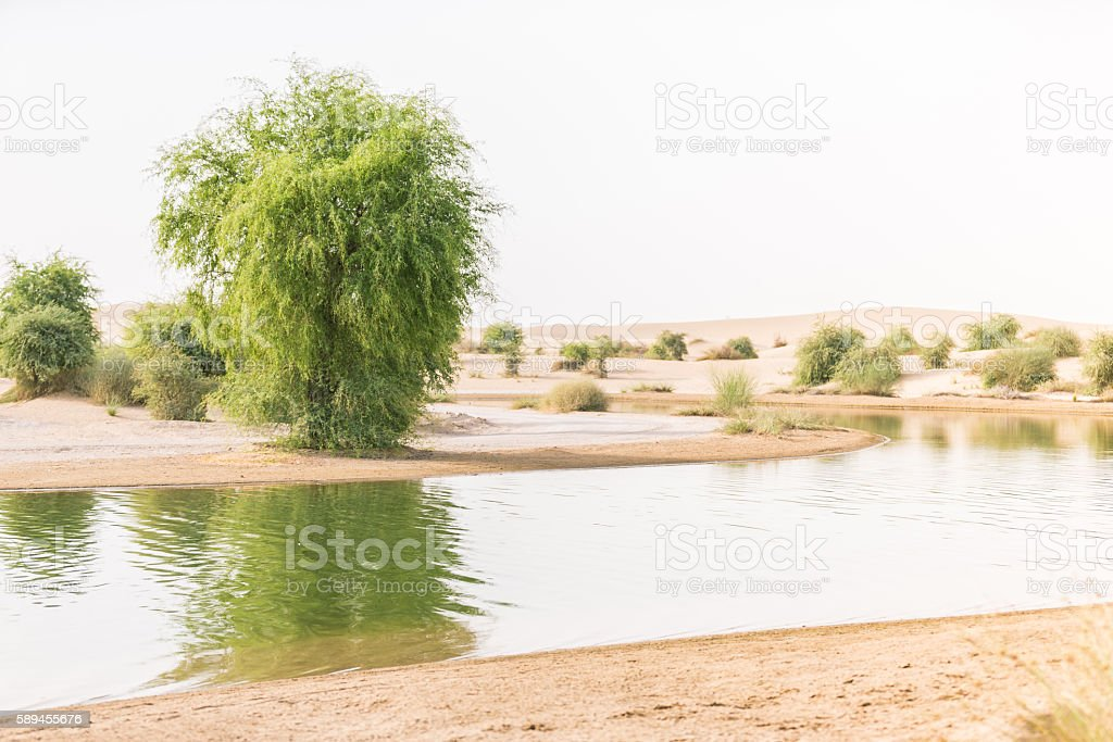 Oasis in a desert, sign of life! stock photo
