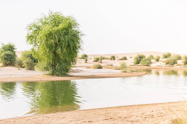 Oasis in a desert, sign of life! - foto de stock