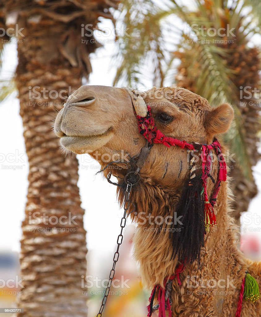 Oasis in desert. royalty-free stock photo