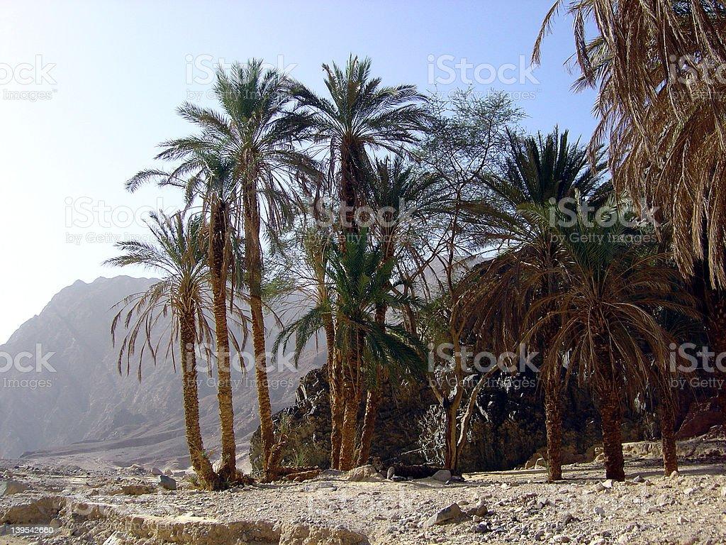 Oasis in desert Sinai royalty-free stock photo