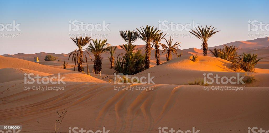 Oasis in Merzouga, Morocco stock photo