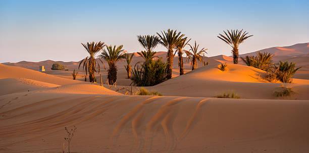 oasis in merzouga, morocco - sahara stock-fotos und bilder