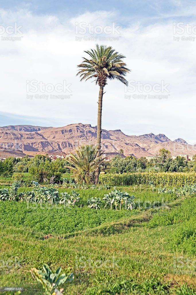 Oasis in the desert Morocco stock photo