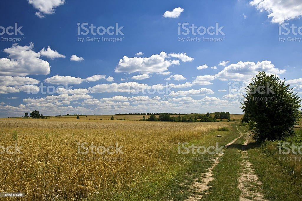 Oat field royalty-free stock photo