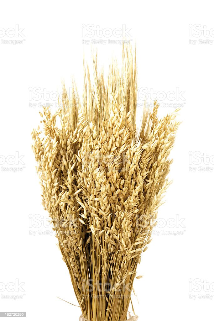 Oat. royalty-free stock photo