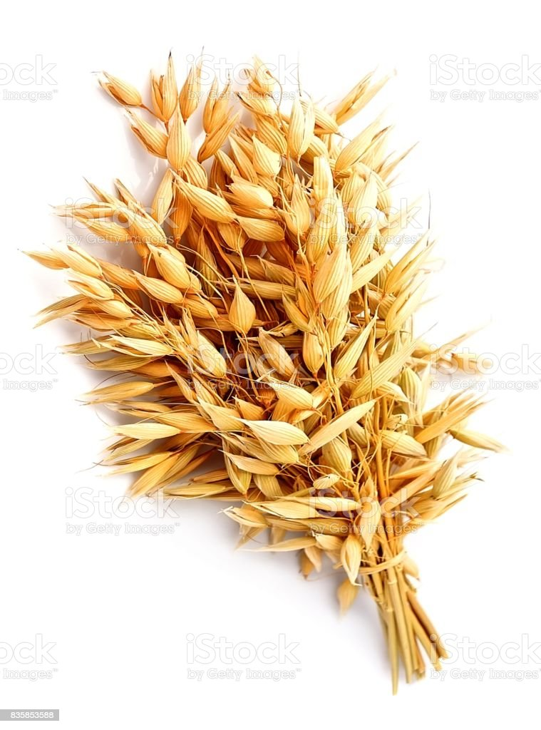 Oat plant isolated stock photo