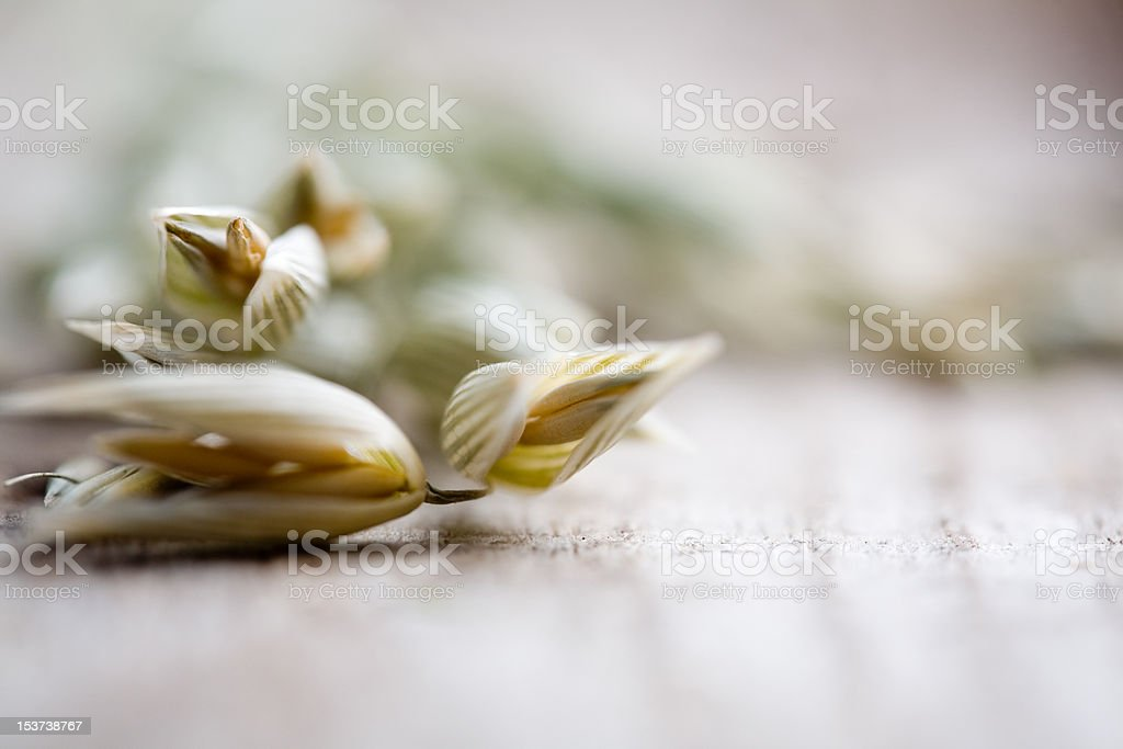 Oat seeds stock photo