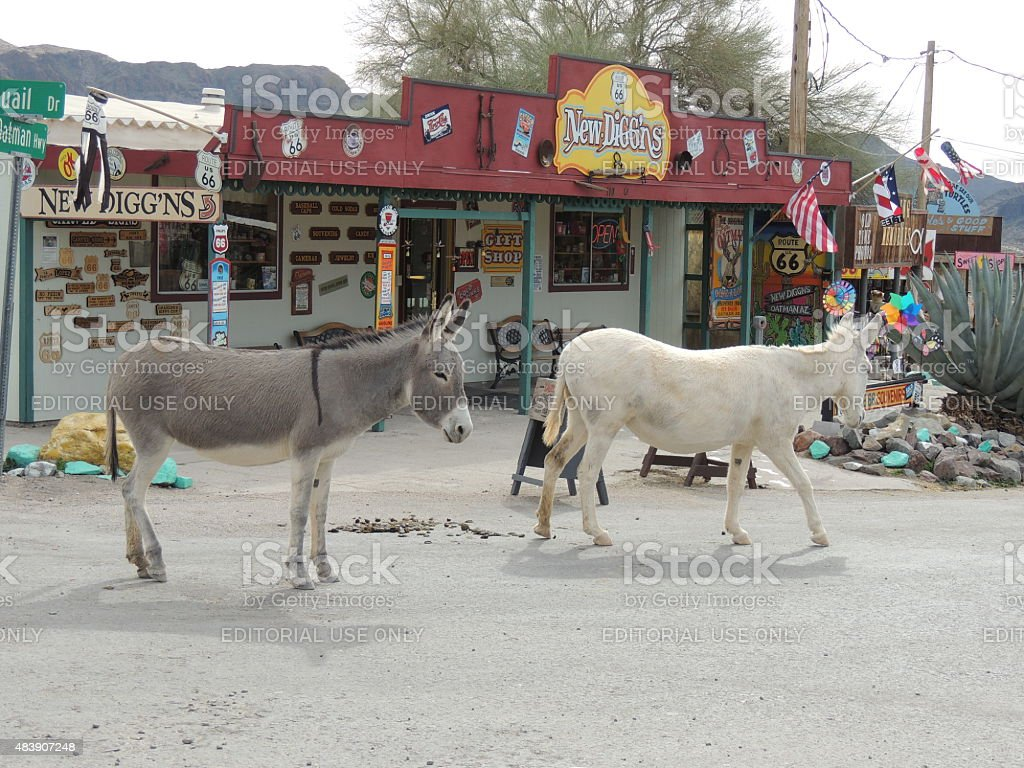 Oatman, Arizona with wild burros stock photo