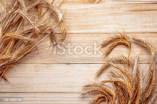 Oats field. Wheat grain ear or rye spike plant isolated on brown wood plank background, for cereal bread flour. Whole, barley, harvest wheat sprouts. Element of design