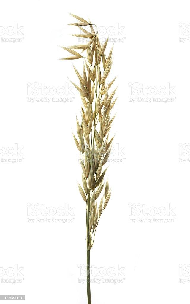 oats royalty-free stock photo