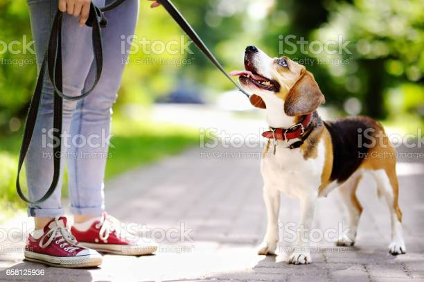 Obedient beagle dog with his owner picture id658125936?b=1&k=6&m=658125936&s=612x612&h=ctojknbeckwfaiskxbhqvmfganrcijnu42xywubv5os=