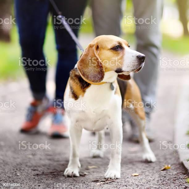 Obedient beagle dog with his owner picture id905746334?b=1&k=6&m=905746334&s=612x612&h=cxbjmwjxqwmgxmpnwvrgjfnqkjemgppyb4gab mk aw=