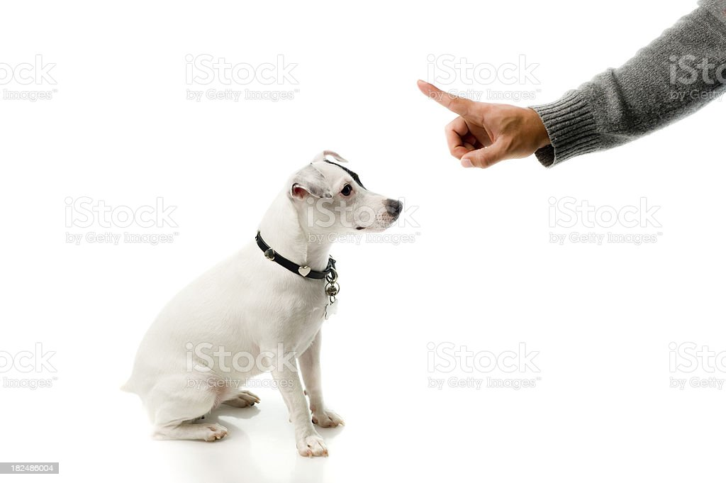 Obedient dog royalty-free stock photo