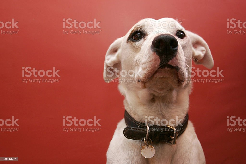 Obedient dog stock photo