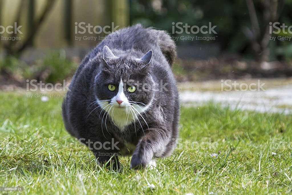 Obese run stock photo