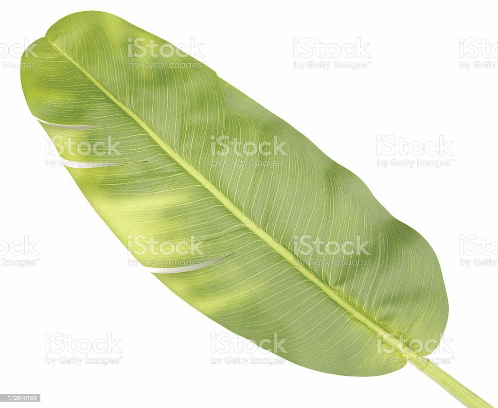Object White Background Banana Leaf royalty-free stock photo