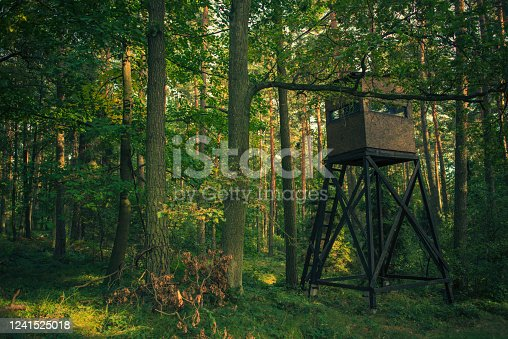 Hunting Wooden Watch Tower With Rectangular Narrow Windows In Middle Of Forest.