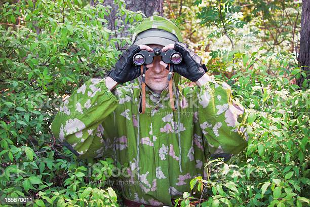 Observer In The Woods Stock Photo - Download Image Now