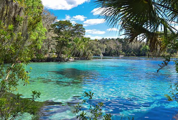 forêt nationale d'ocala-silver glen ressorts - source naturelle photos et images de collection