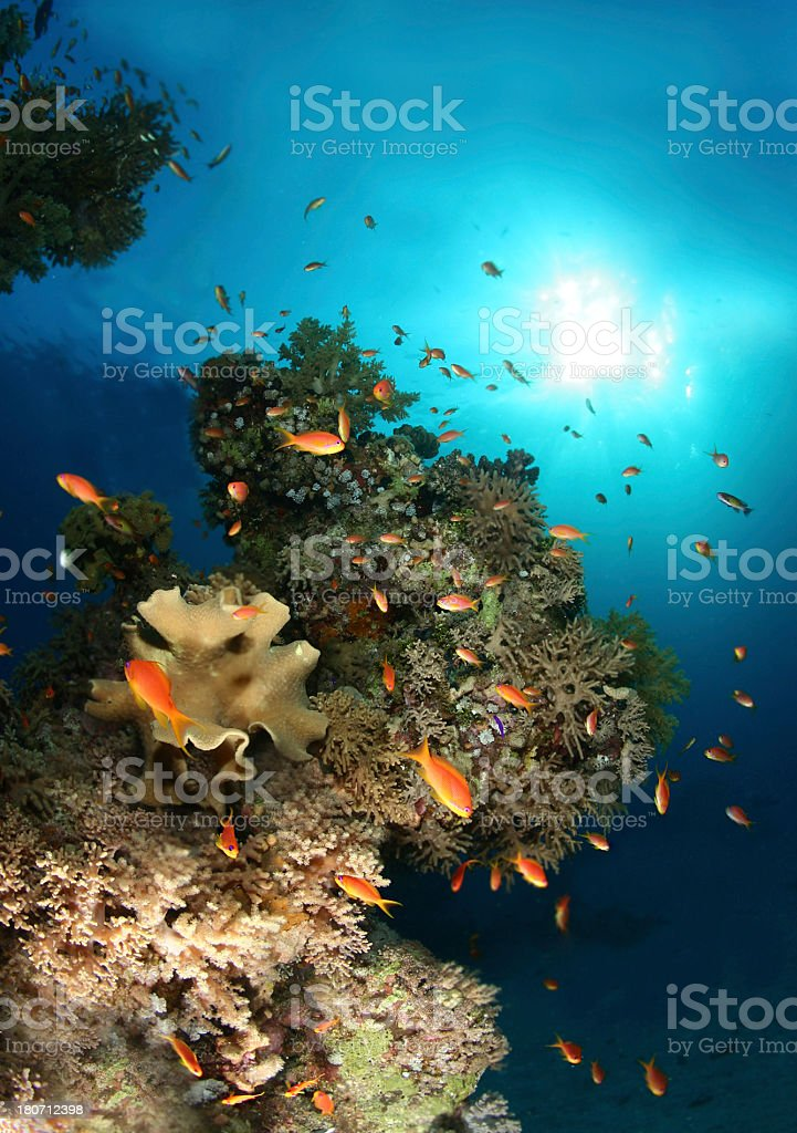 Ocean and sun royalty-free stock photo