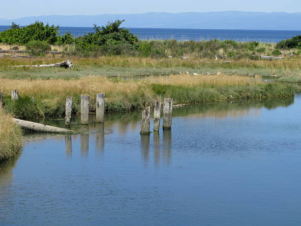 ocean bay scene - bioremediation stock photos and pictures
