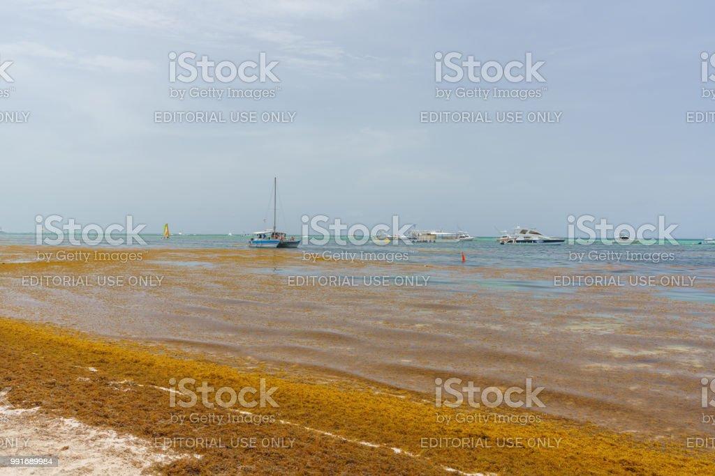 Ocean Beach In Bavaro Punta Cana Flooded By Sargassum
