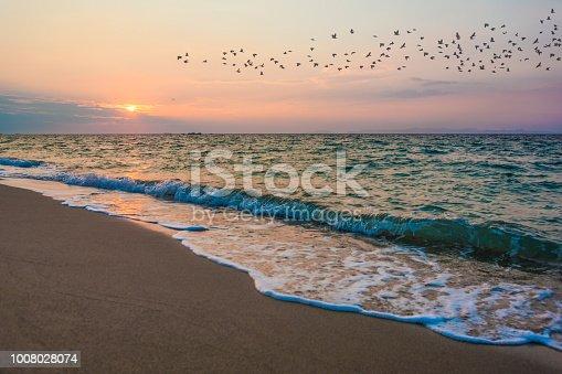 Ocean beach sunset and flying birds