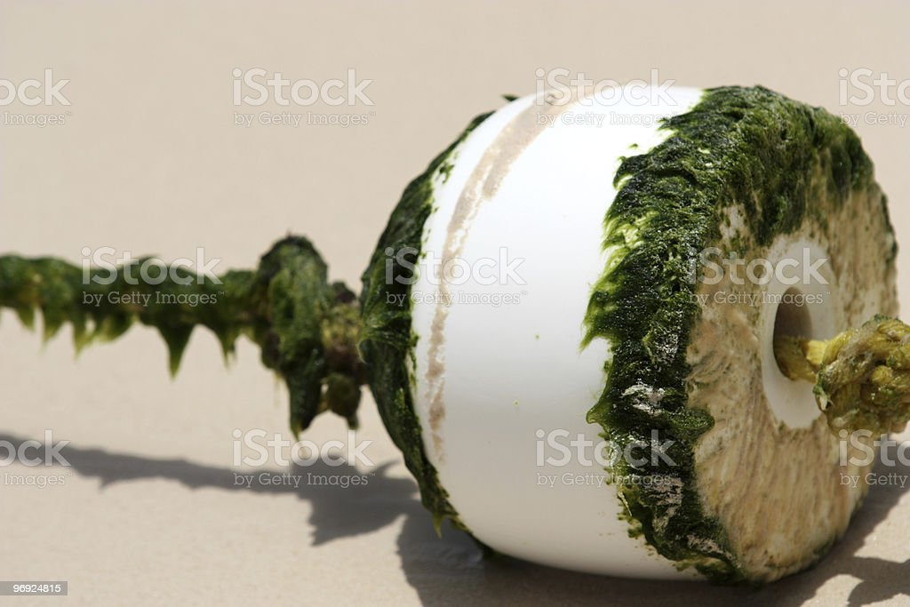 Ocean Bouy With Seaweed Growth royalty-free stock photo